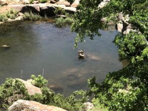 Hiking Trail Duck